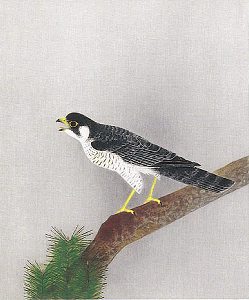 Japanese Hawk or Falcon paintings and prints by Atsushi UEMIURA