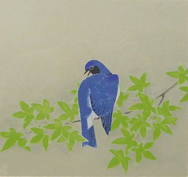 Blue-and-white Flycatcher, by Atsushi UEMURA