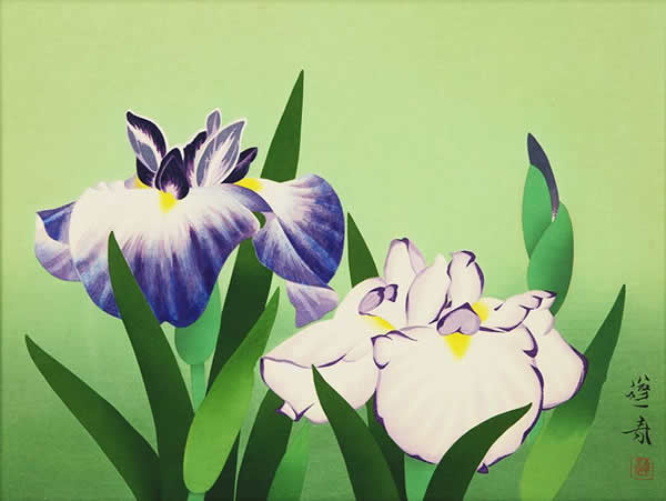 Japanese Iris paintings and prints by Hoshun YAMAGUCHI