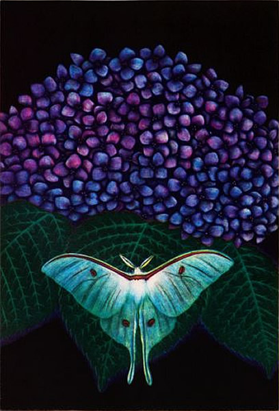 Japanese Butterfly or Moth paintings and prints by Matazo KAYAMA