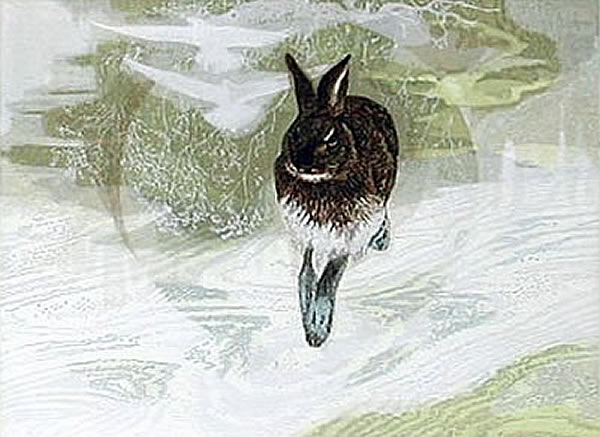 Japanese Rabbit or Hare paintings and prints by Yoshihiro SHIMODA