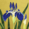 Japanese Iris paintings and prints