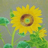 Japanese Sunflower paintings and prints
